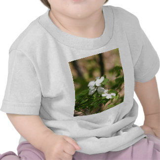 spring flowers tee shirt