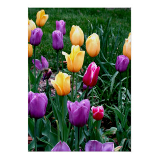 Spring Flowers Tulips Pink Yellow Purple Garden Poster