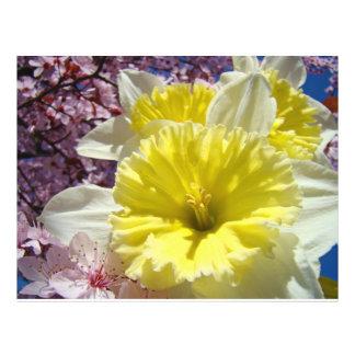 Spring Flyer paper custom Daffodil Flowers