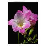 Spring freesia flowers greeting card