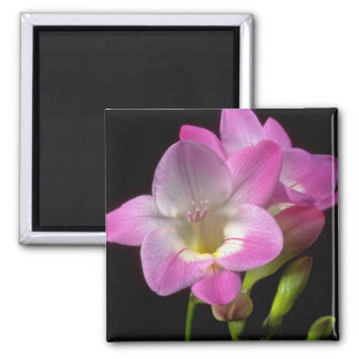 Spring freesia flowers square magnet