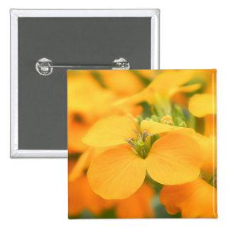 Spring Garden - Cheiranthus allionii Button