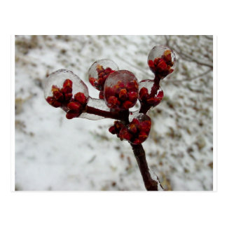 spring ice storm jpg postcard