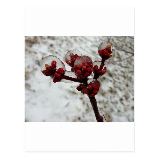 spring ice storm.jpg post cards
