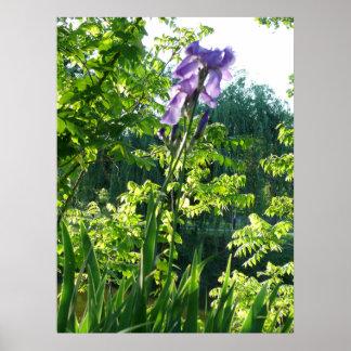 Spring Iris Posters