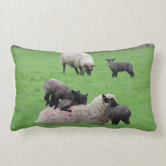 Spring Lamb and Sheep Lumbar Cushion