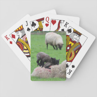 Spring Lamb and Sheep Playing Cards