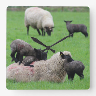 Spring Lamb and Sheep Square Wall Clock