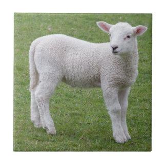 Spring lamb tile