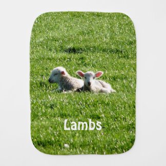 Spring Lambs in the Sunshine Cornwall England Burp Cloth