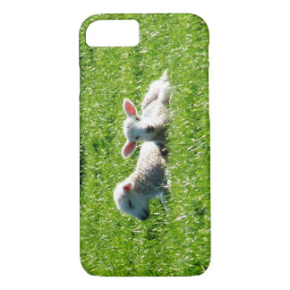 Spring Lambs in the Sunshine Cornwall England iPhone 8/7 Case