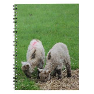 Spring Lambs Notebooks
