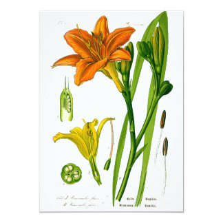 Spring Lily 13 Cm X 18 Cm Invitation Card