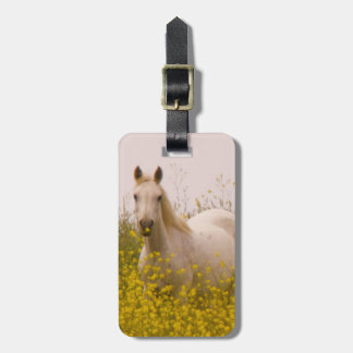 Spring Luggage Tag