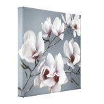 Spring Magnolia blossom, pink, soft grey Canvas Prints
