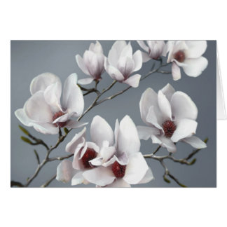 Spring Magnolia blossom, soft grey Card