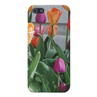 Spring Means Tulips iPhone 5 Cases