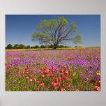 Spring mesquite trees growing in wildflowers