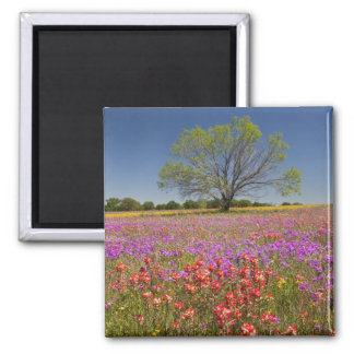 Spring mesquite trees growing in wildflowers, magnet