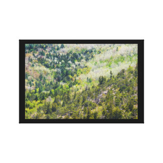 Spring On Cadillac Mountain Acadia National Park Canvas Prints
