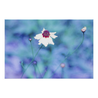 Spring Photography Blooming Flower Posters