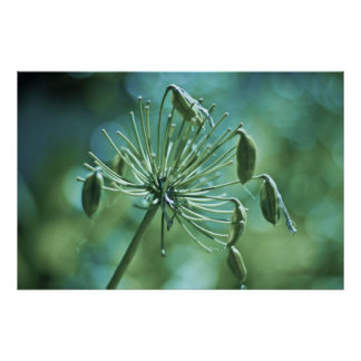 Spring Photography Blooming Flower Poster