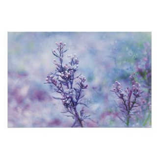 Spring Photography Blooming Flowers Posters