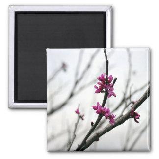 Spring Pink Magnet