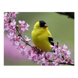 Spring Postcard/Pink Background Postcard