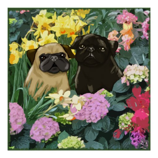 Spring Pugs Poster