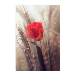 Spring Red Poppy Bohemian Flower Acrylic Wall Art