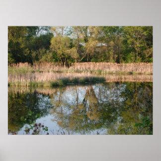 Spring Reflection Print