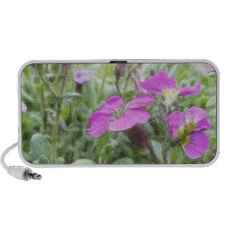 Spring Rock Cress Flowers iPhone Speakers