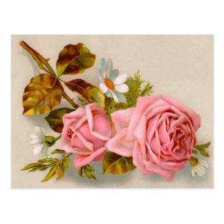 Spring Roses Vintage Postcard