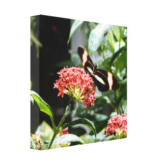 spring seasons ; butterfly canvas gallery wrapped canvas