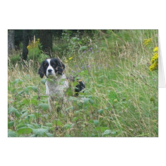 Spring spaniel, greeting card