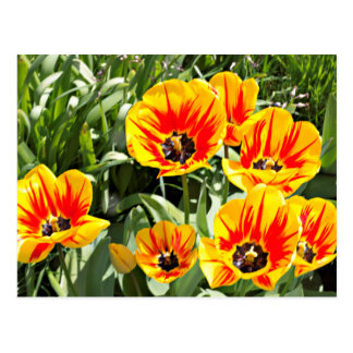 Spring Sunshine Postcard