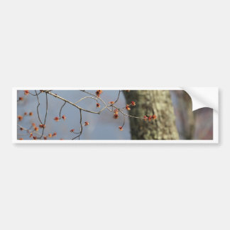 Spring Time Bloom Bumper Sticker