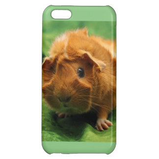 Spring Time Guinea Pig Phone Case Cover For iPhone 5C