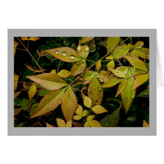 Spring time Nandina leaves with rain drops Greeting Card