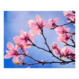 Spring Tree Blossoms Photo
