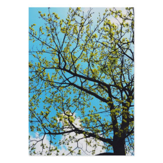 Spring tree business cards
