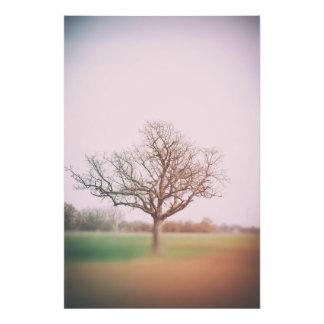 Spring tree photo print
