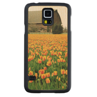 Spring tulips bloom in front of old barn. carved maple galaxy s5 case