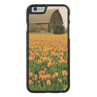 Spring tulips bloom in front of old barn. carved maple iPhone 6 case