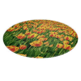 Spring tulips bloom in front of old barn. cutting board