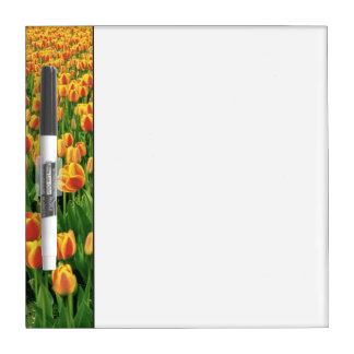 Spring tulips bloom in front of old barn. dry erase white board