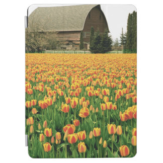 Spring tulips bloom in front of old barn. iPad air cover
