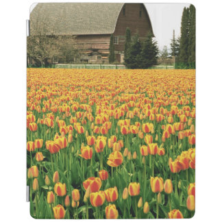 Spring tulips bloom in front of old barn. iPad cover