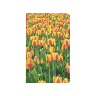 Spring tulips bloom in front of old barn. journal
